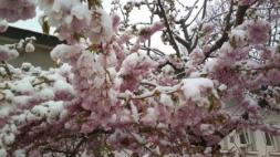 Blüten im Schnee