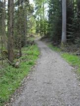 Waldlauf
