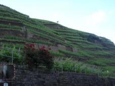 Landschaft3